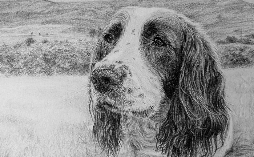dog portrait detail