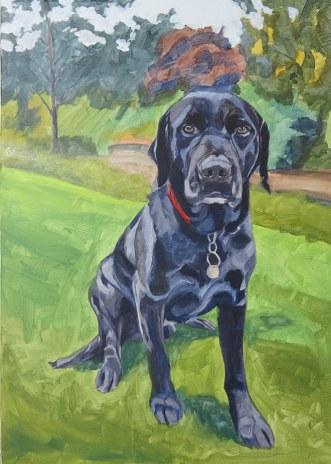 colour blocking of a pet portrait