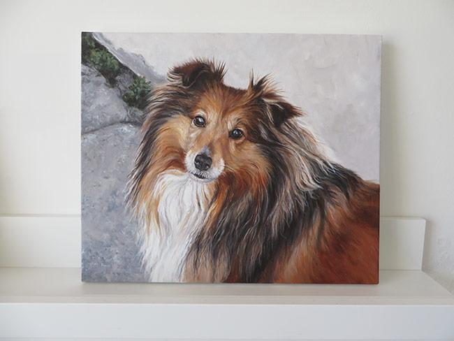 Shetland sheepdog portrait on canvas