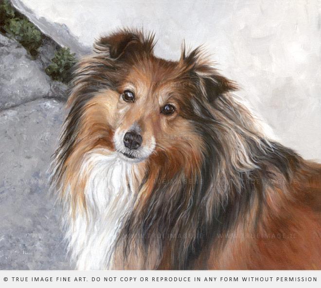 Sheltie acrylic dog portrait