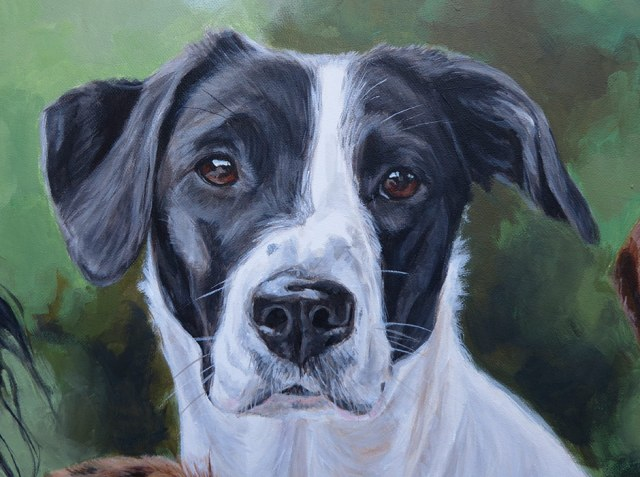 pointer labrador cross dog portrait