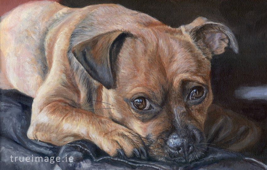 tan jack russell dog painting detail