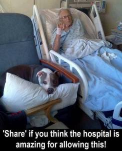 All hospitals should allow pets to spend time with patients