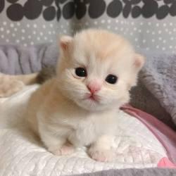 So cute…