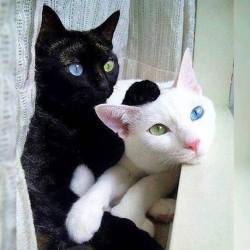 Their eyes are exact opposites <3 <3