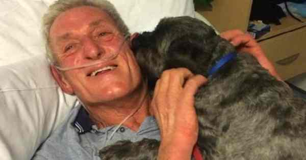 Dog Miraculously Cures His Master From Life Threatening Disease, Not Only Once But Twice
