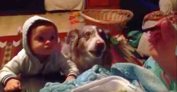 Dog Says The Word 'Mama' First Before The Baby Can Utter It! See Mom's Reaction