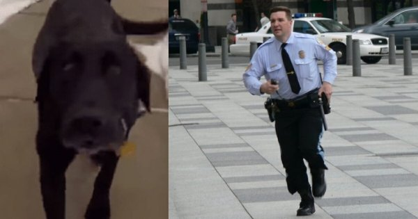Frantic Labrador Makes The Cop To Follow Him… What Happened Next Is Considered Heroism