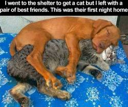 """""""I went to the shelter to get a cat but I left with a pair of best friends. This was their first night home.""""  LOVE this! <3"""