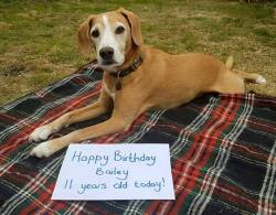 """""""Our beautiful girl Bailey turns 11 today. We would love it if you could wish her a Happy Birthday!""""  Happy Birthday Bailey!"""