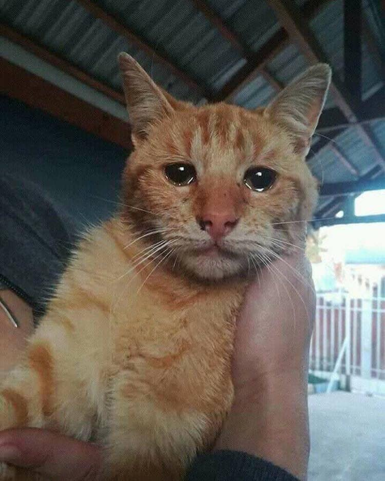 This cat was abandoned and this is his photo minutes after being rescued  For those who believe  ...