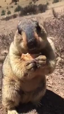 Watch Snack Time