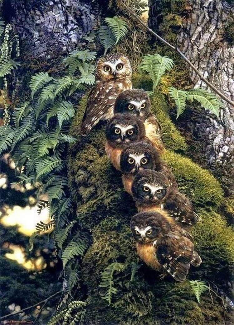 6 Owls :o