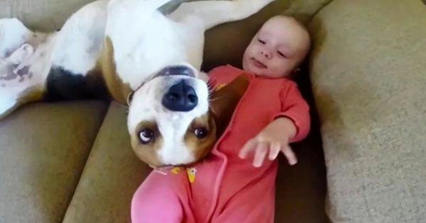 Babysitting Dog Shows Something Incredible Tricks That He Was Never Taught Of