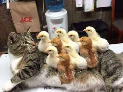 """""""Cat suffers a horrible case of Chickenpox…"""""""