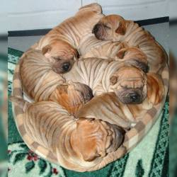 """Cinnamon rolls…"" :P"
