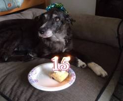 """""""This is Chloe and today is her 15th birthday. She is my heart dog and I love her to pieces. Please wish her a happy day.""""  Happy Birthday Chloe!"""