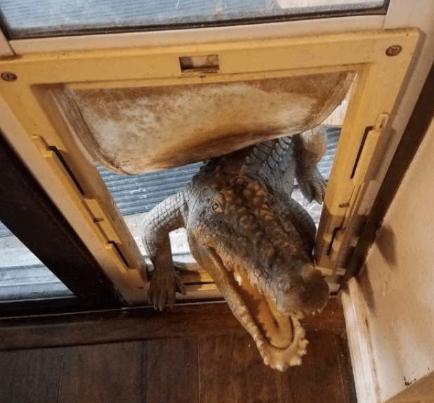 Why having a pet door is a bad idea in Florida. :D