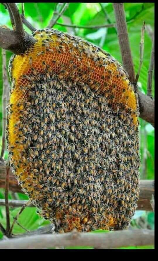 Please say something about BEES