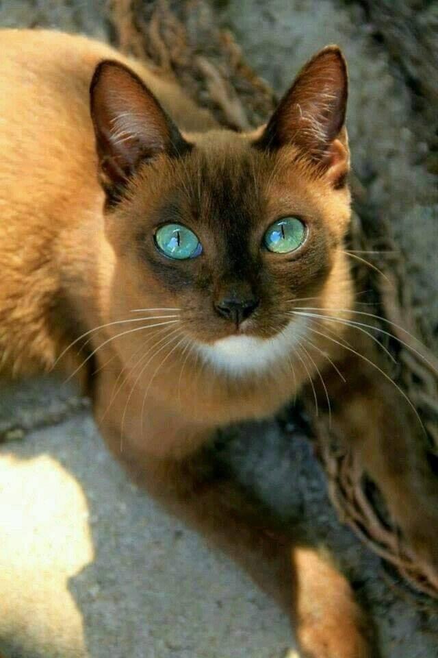 Beautiful cat..
