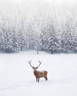 He posed for the perfect snowy composition Montebello,Quebec,Canada