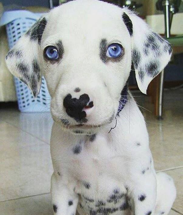 If I belonged to you…what would you name me?
