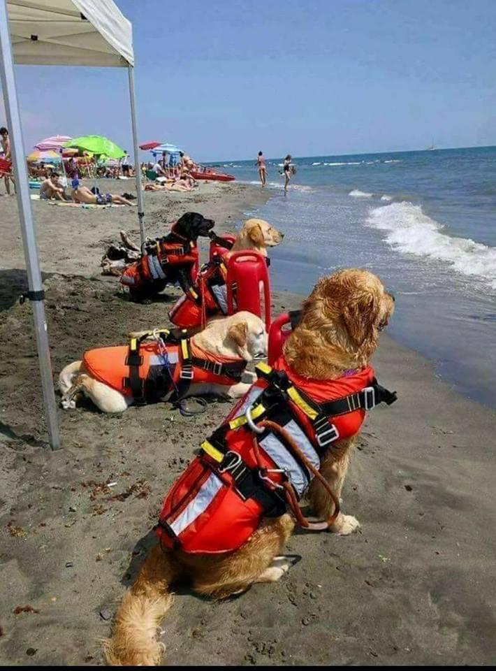 Lifeguard dogs in Croatia.