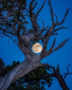 Nature-Framed Moon in Grand Canyon National Park, Arizona, U.S.