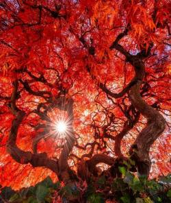 Say something about this amazing tree <3