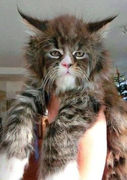 """""""This has to be the coolest looking cat I have ever seen…"""""""