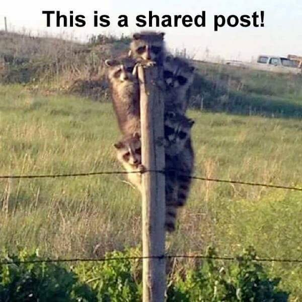 This is a shared post!