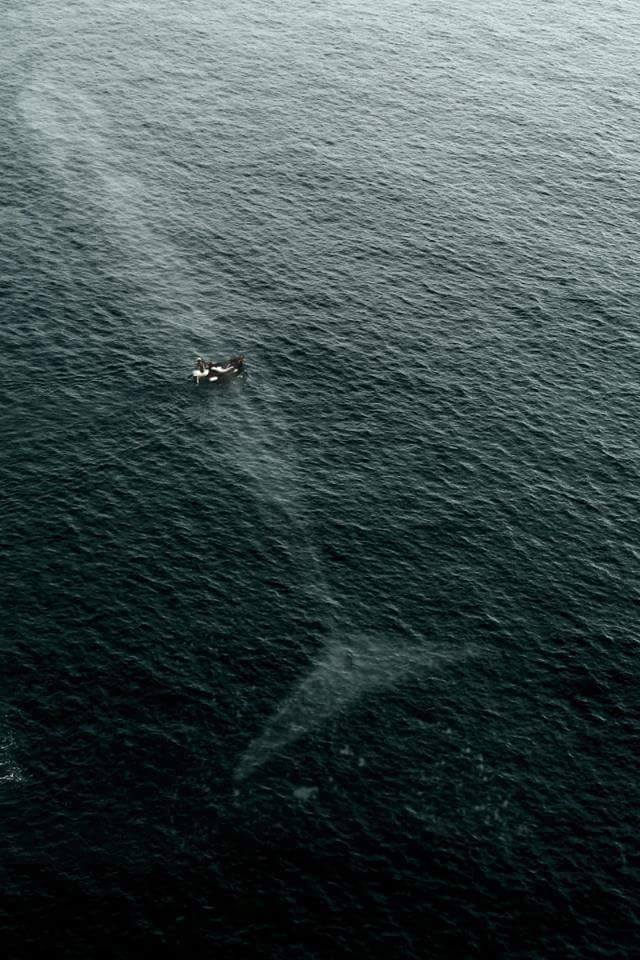 You're never alone in the ocean.