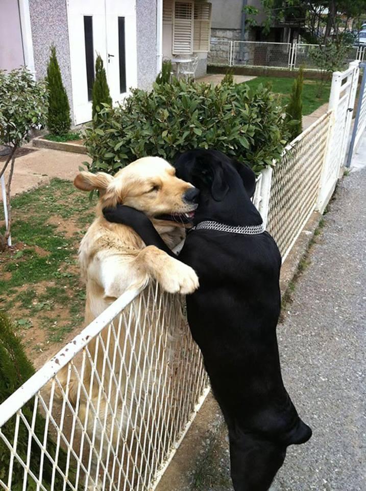 """A hug """"Hello!"""" :)"""