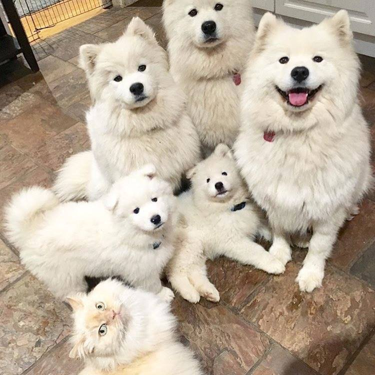 Cutest family picture ever