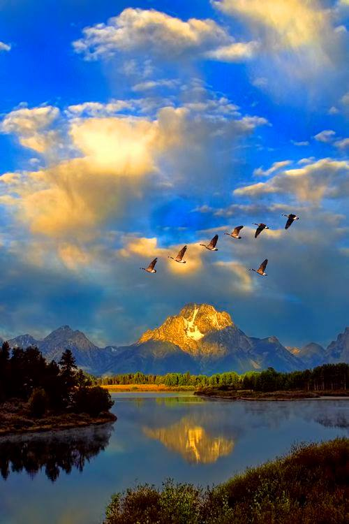 Flock of geese with an incredible scenery. :o