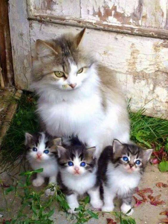 From 1 to 10 how beautiful is this family?