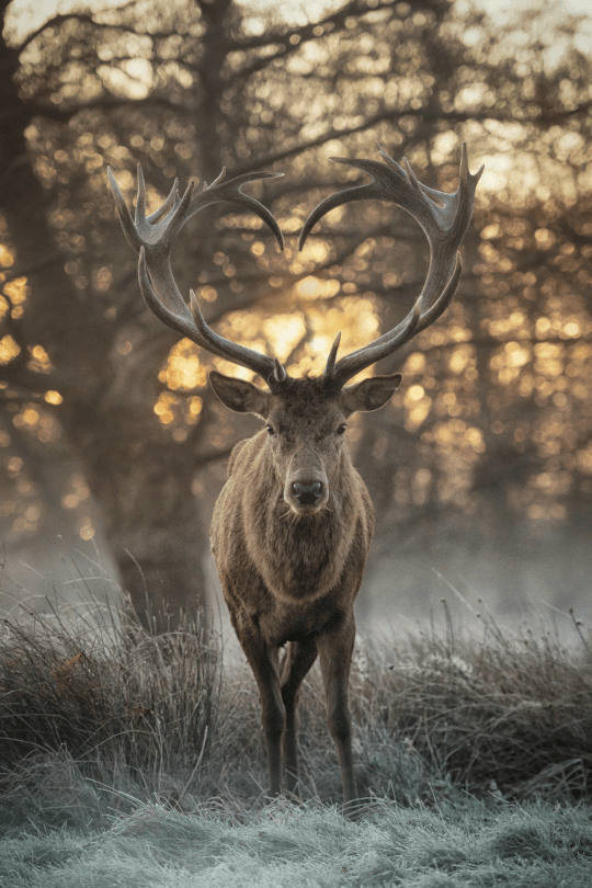 Heart Shaped Antlers <3
