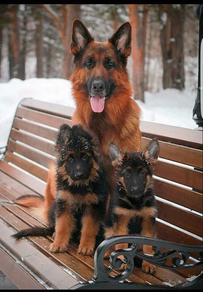 How beautiful is this family photo ?