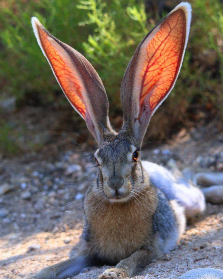 Mr. Big Ears! :)