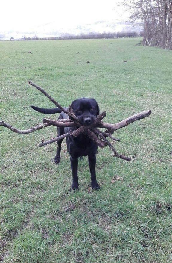 Not sure which stick was thrown, so he got them all.