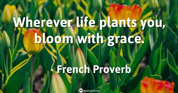 Wherever life plants you, bloom with grace. – French Proverb