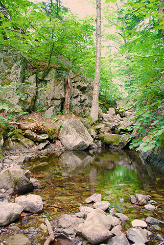 A pool in the woods