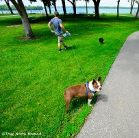 fort-malden-puppies