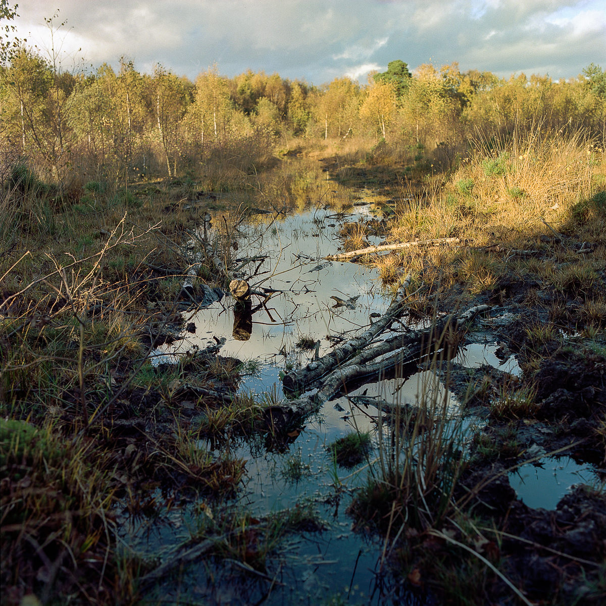 Contemporary Landscape Photography - Skipwith Common