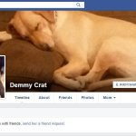 UNLEASHED: Wasserman's Dog Ensnared in Hack; Chair Used DNC Email to Launch Pup's Facebook Page