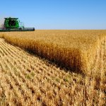 Russia earns more from agriculture than arms sales