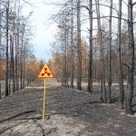 Chinese, Germans Bidding To Turn Abandoned Nuclear Wasteland Of Chernobyl Into Solar Farm
