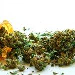 Democrats Demand Trump Clarify Stance On Medical Marijuana
