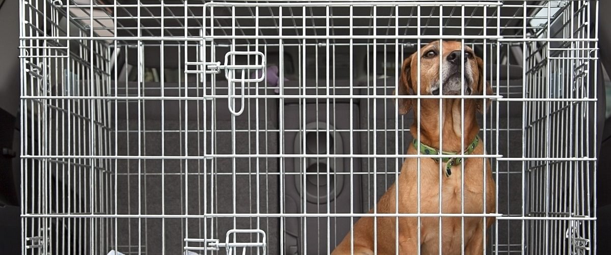 EXCLUSIVE: Taxpayer Watchdog Group Sues Department Of Veterans Affairs For Hidden Info On Dog Experiments