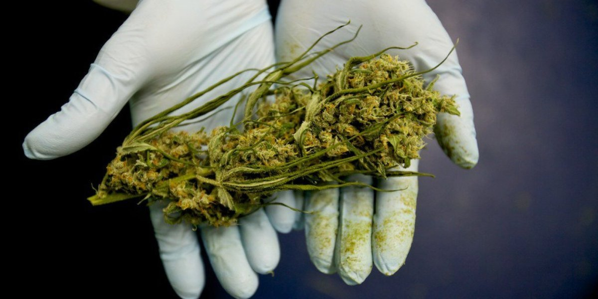 Weed Is A Cancer Cell Destroyer, Study Finds